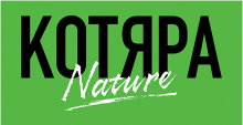 Логотип Котяра
