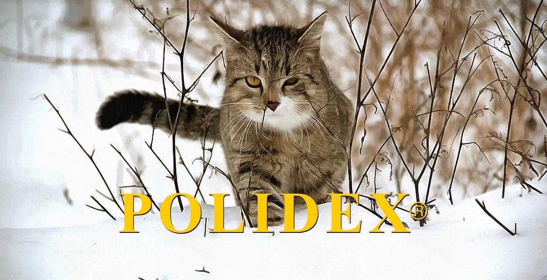 Профилактика и лечение воспалительных дегенеративных изменений суставов у кошек.